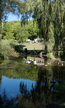 photo of pond with trees