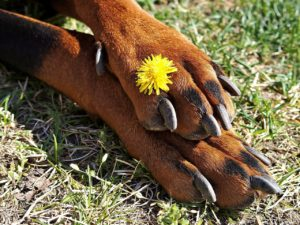 dog paw with flower